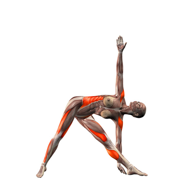 la bible du yoga christina brown pdf
